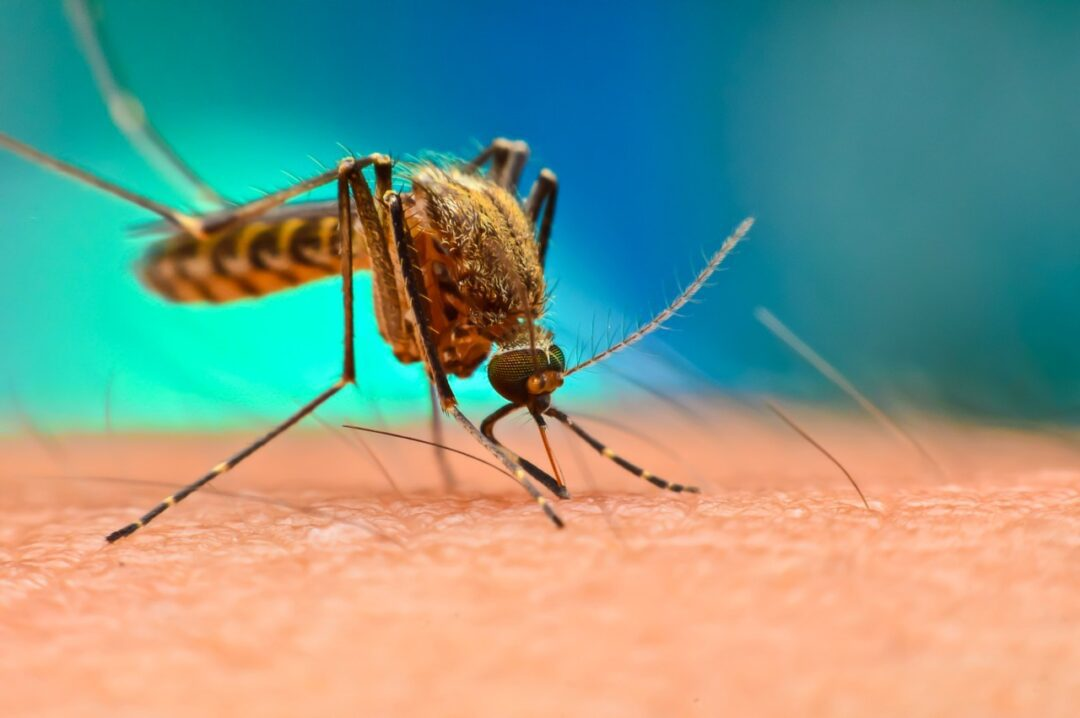 What diseases can mosquitos spread?