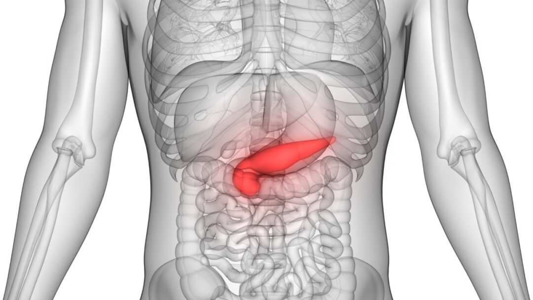 What is the function of the pancreas?