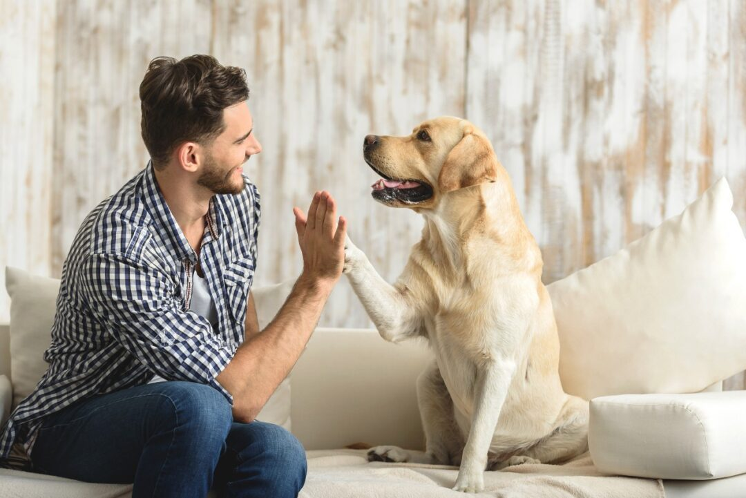 Are there health benefits to having pets?