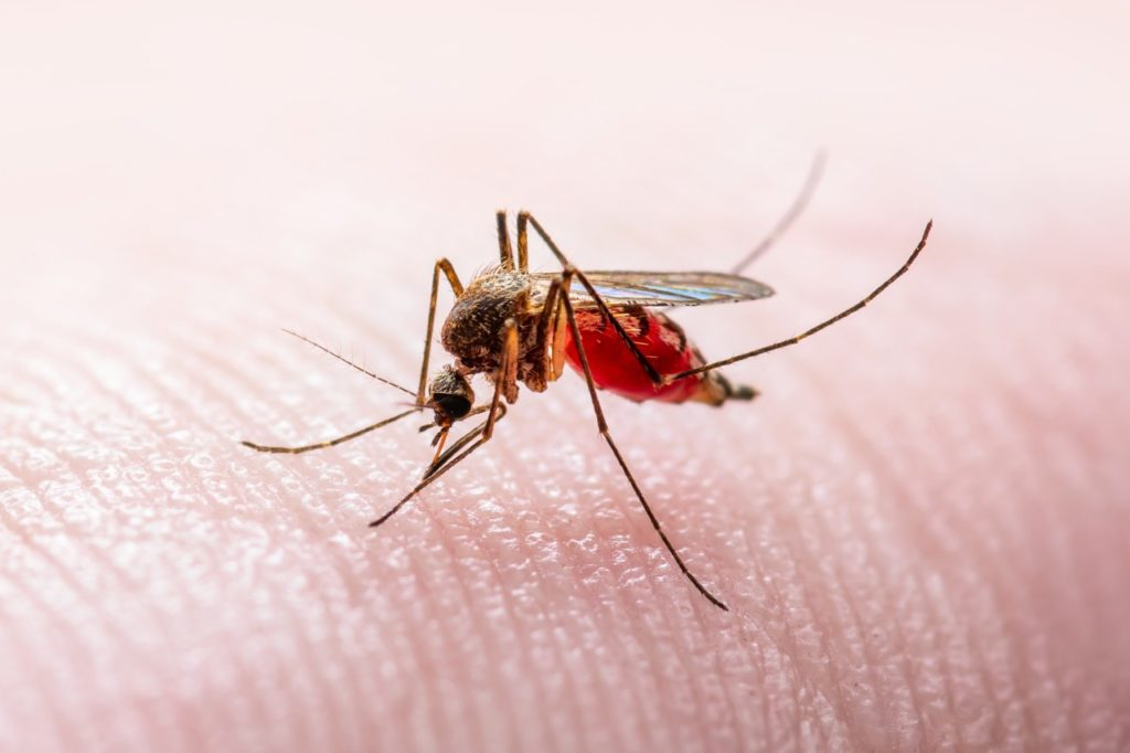 How can West Nile Disease be avoided?