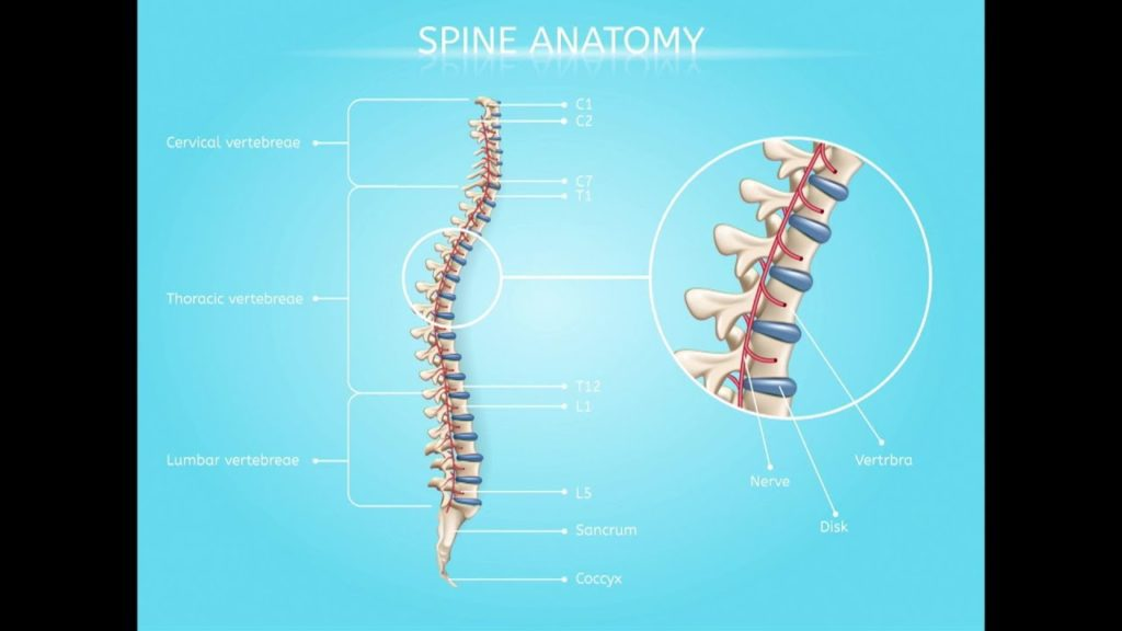 Anatomy of Spinal Fractures